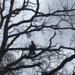 orez stromov a dendrológia